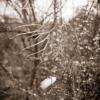 NaturaSepia - La plume